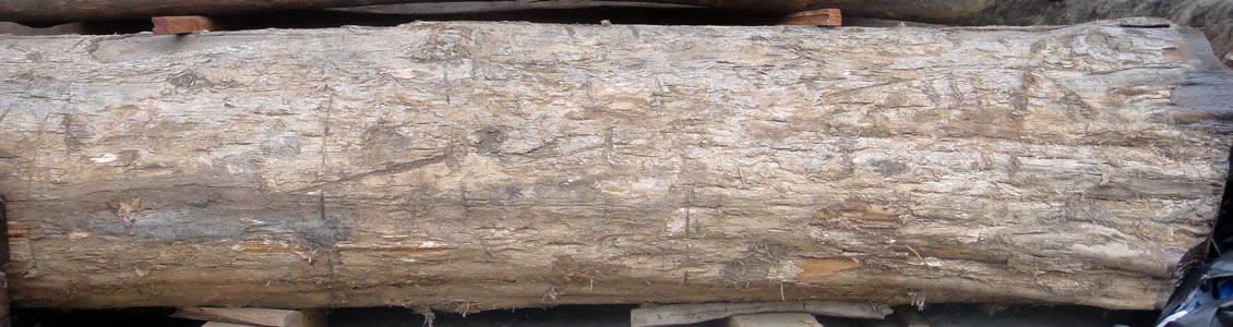 缅甸柚木原木材