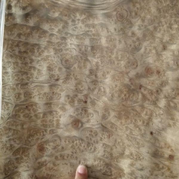 山香果树榴