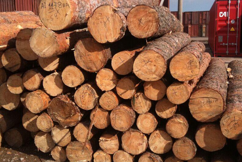 出售东北红松原木