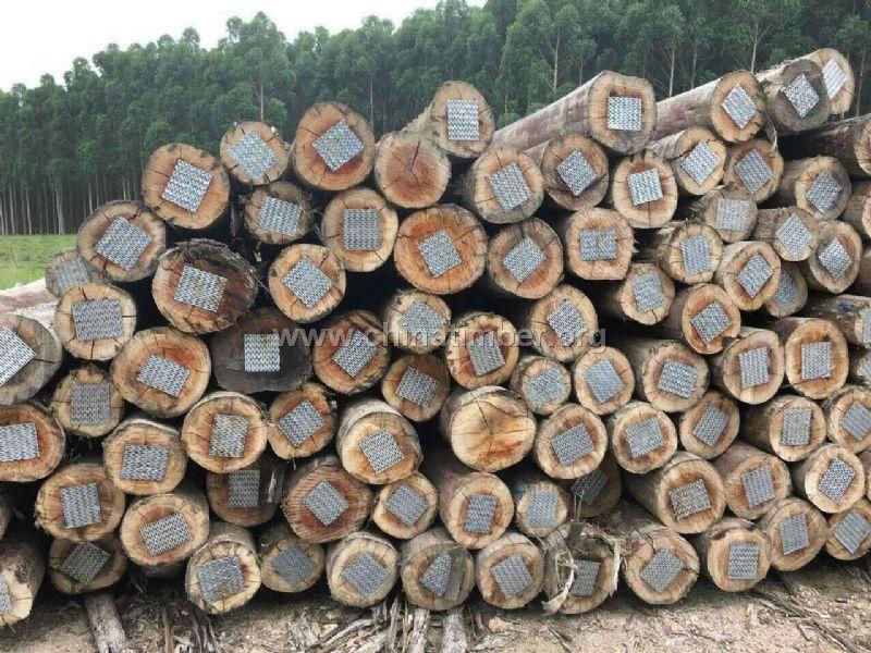 旋切级桉木(巴西玫瑰桉木)