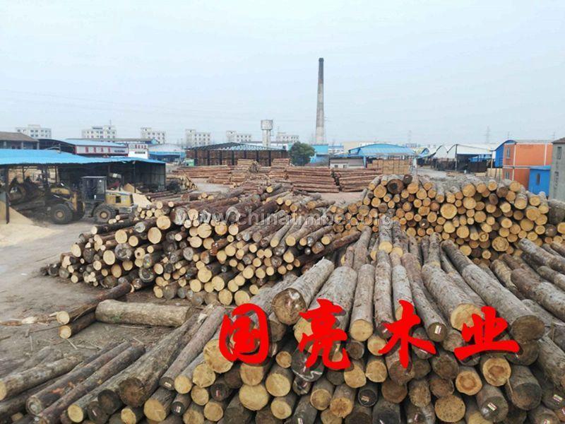 日本柳杉打桩木白松原木批发防汛木桩