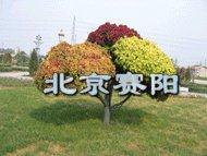 国庆花坛,立体花坛