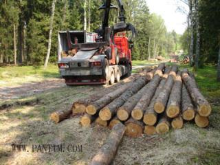 德国红松原木