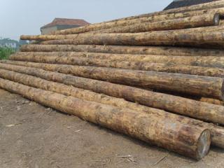 常熟木材落叶松原木