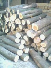 杉木原木 青冈 柞木  柳杉木板材毛料