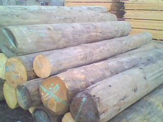 加拿大铁杉原木