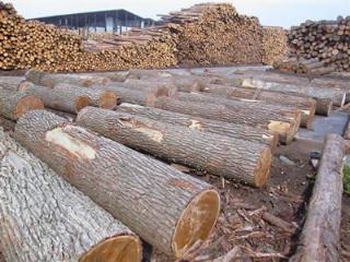 松木 衫木 杂木 成品木