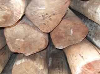 东南亚进口原木大叶紫檀