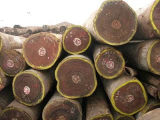 马达加斯加进口原木卢氏黑黄檀(大叶紫檀)