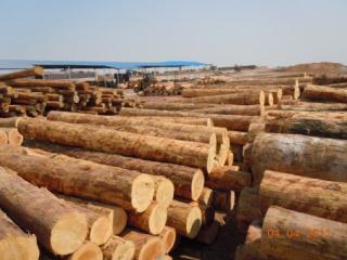 新西兰辐射松、北美铁杉花旗松建筑木方