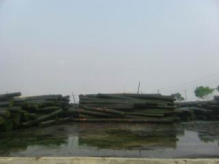 原木堆��