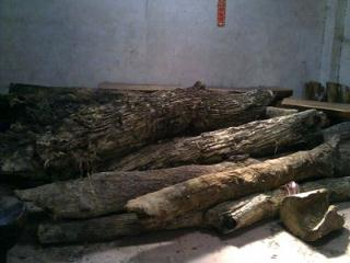 阴沉木原材