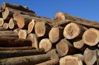 缅甸灰桑原木