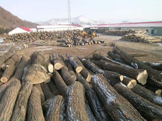 陕西长期供应秦岭榆木原木