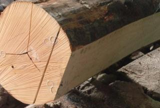 特殊厚度榉木鞋材