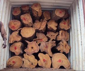 刺猬紫檀/非洲黄花梨进口报关代理