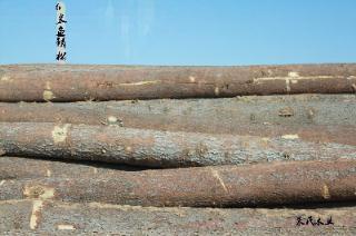 俄罗斯进口原木