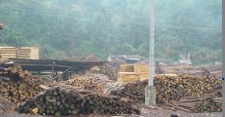 落叶松原木与废材加工