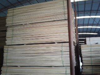 进口无节樟子松桦木烘干木材及各种家具木板材