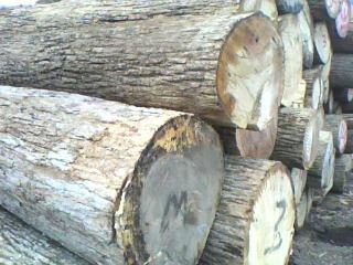 水曲柳原木,板材