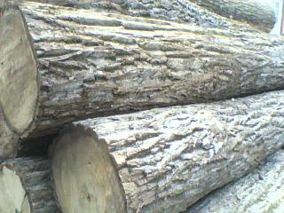 楸木原木,板材