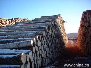桦木原木,板材