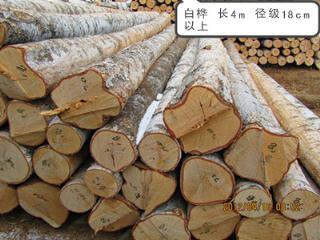 木材白桦木长4m 径级18cm以上