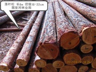 木材 长6m 径级18-22cm