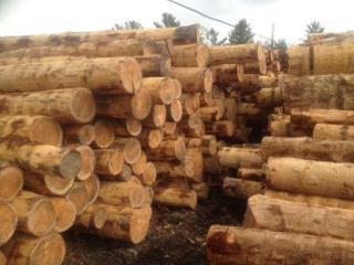 北美松木原木