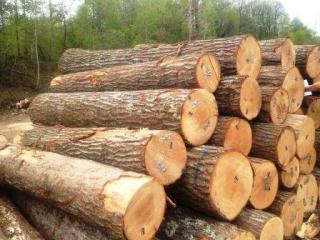 美国东北部红橡原木