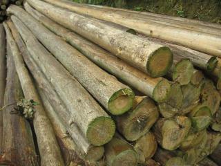 木方及原木