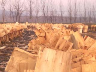 杨木板  松木板