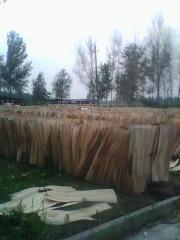 白杨旋切木皮