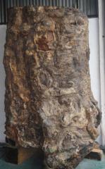 正宗缅甸花梨原木