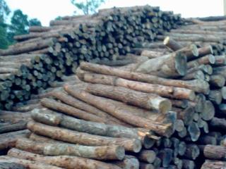 松木方条或原木