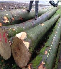 新季榉木线材