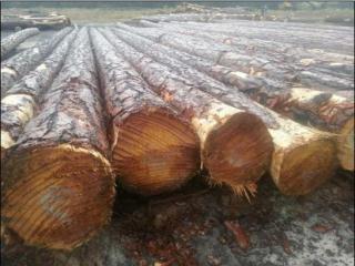 美国南方松原木