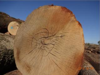 刨切级红橡原木