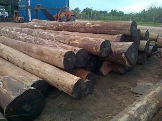 林场大量直供FSC桉木原木