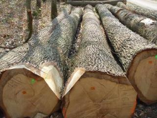 白橡原木 法国
