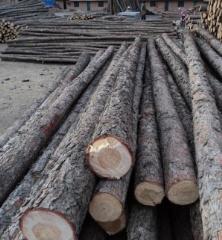 檩条  小杆子原木 矿柱