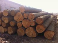 沈阳建筑木方模板防腐木碳化木