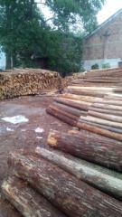 杉木 原木