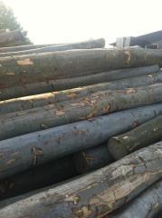 小锯材级榉木原木