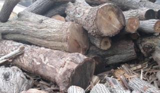 厂家低价供应优质杏木原木,杏木原木价格