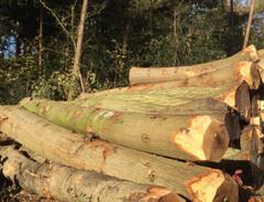 欧洲橡木原木 三面清四面清