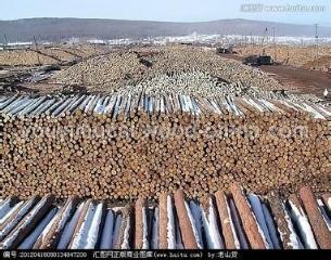 落叶松原木,木方,道木,板材