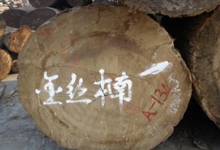 优质金丝楠原木