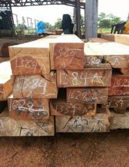 长期供应南美洲黑刚线,军刀豆木