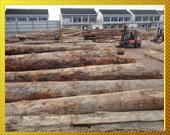 供应福建木材